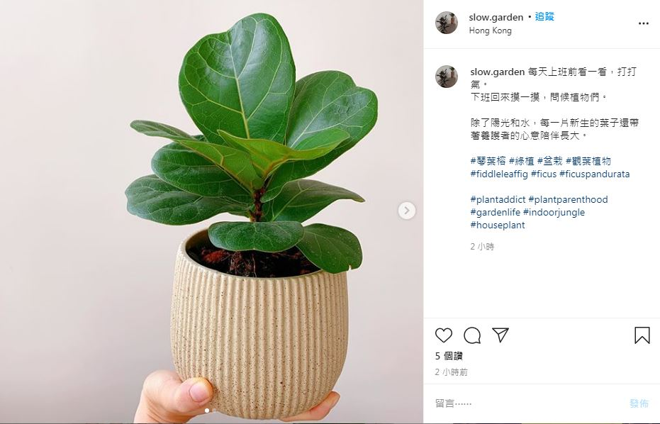 迎接2021居家風格大改造!推薦11種100元內觀葉植物