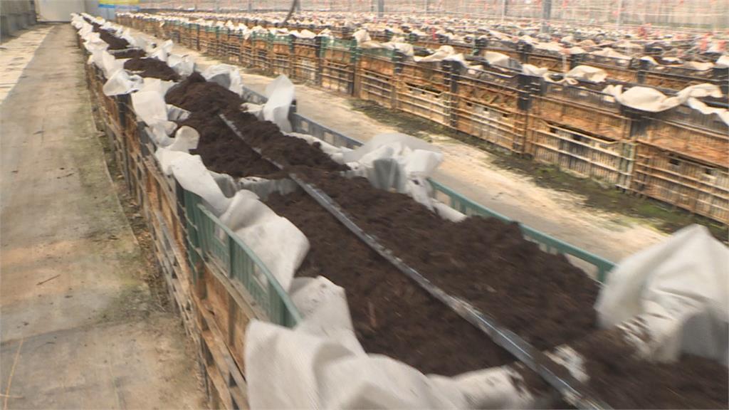 以色列滴灌技術 苗栗苑裡青農引妙招抗旱 銅鑼鄉改種耐旱硬質玉米 省水還能供給內需