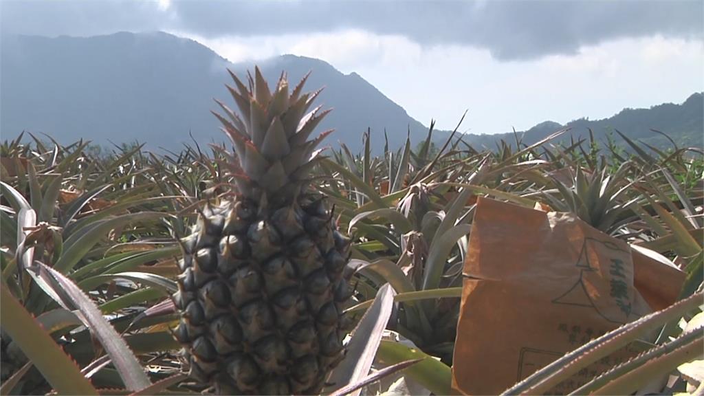 繼香蕉後 鳳梨.芒果和火龍果獲准進軍東奧