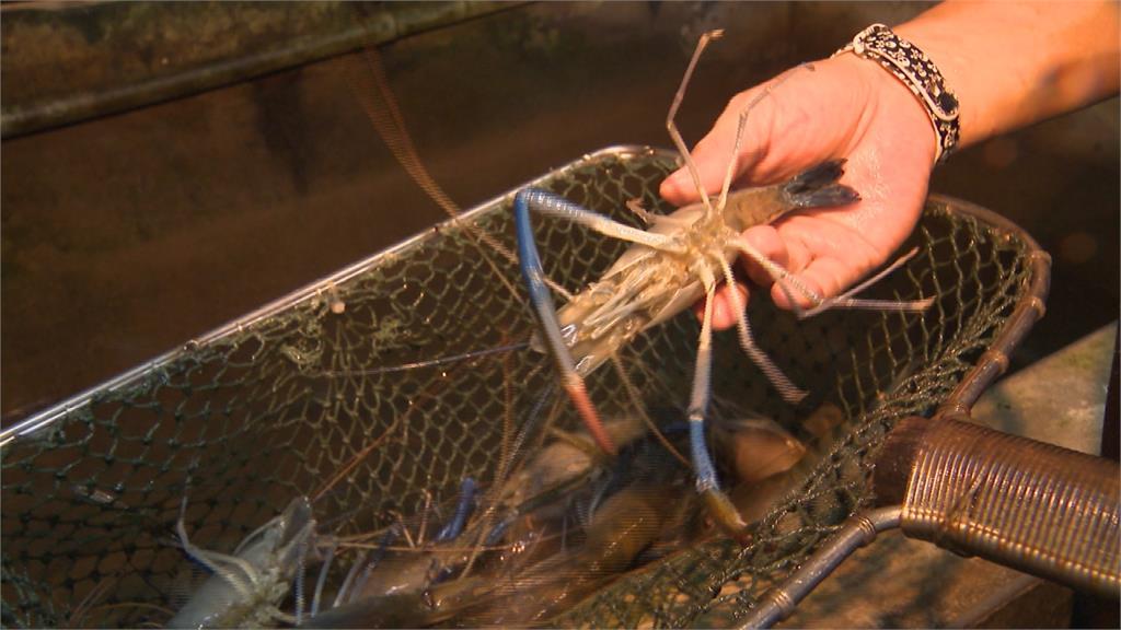 北市暴增158例 夾娃娃機店、釣蝦場全面停業