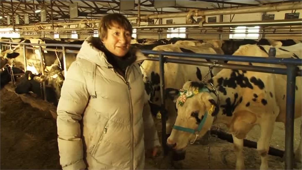 俄羅斯也過農曆年!彩繪工廠「造型牛」花紋華麗