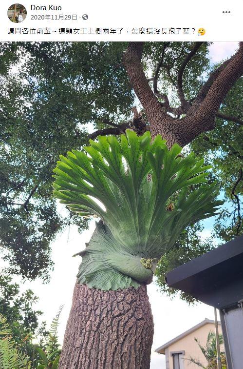 根本阿嬤養的!10棵大到超越想像的觀葉植物