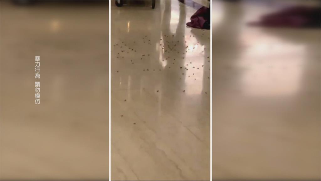 警餐敘被丟上千隻蟑螂 疑為黑幫份子犯案
