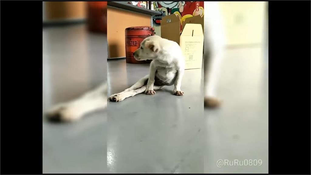 另類台灣之光!天使愛媽不放棄 流浪狗從癱瘓中站起感動南韓網友