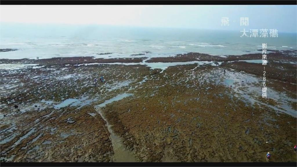 環團嗆藍別蹭藻礁聲量!蔡壁如矛頭指向總統.鄭文燦