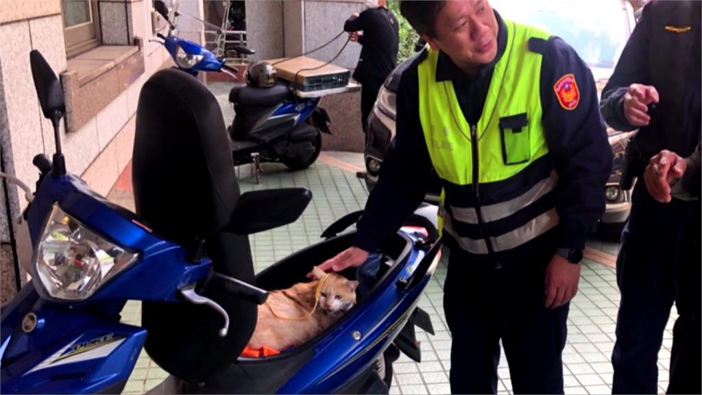 「貓貓好可愛!」 偷貓賊竟將店貓塞後車廂載走