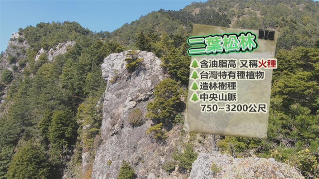 嘉明湖又見5營火殘跡!  林管處:最高可罰60萬