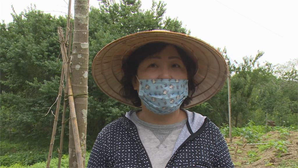 「寒流 乾旱」結果率高果實小 農民開放遊客採梅