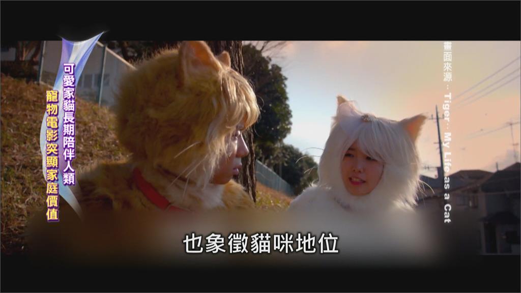 爸爸變貓咪怎麼辦?東西方推出同題材電影