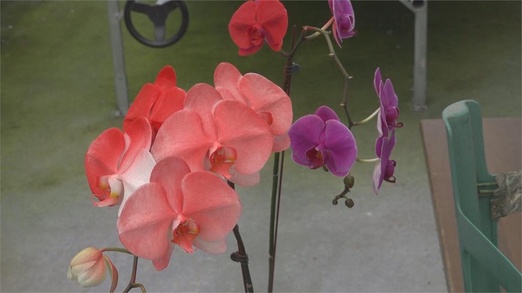 植物用水性染料 提供客製化花朵顏色