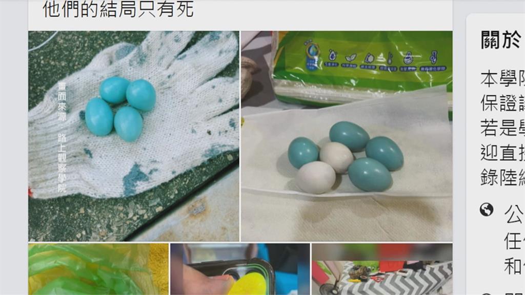 是漆上去的嗎? 「蒂芬尼綠」鳥蛋美到像假的