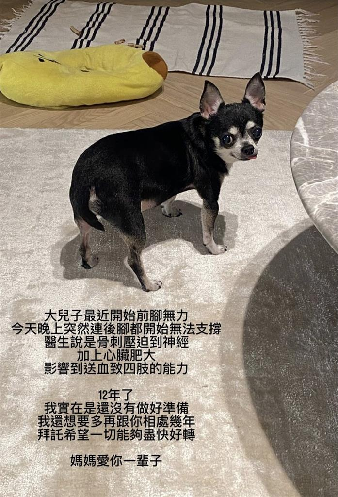 鄧福如「大兒子」生病送醫 心碎告白12年愛犬:還沒做好準備