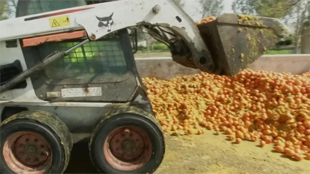 橘子發酵竟然能發電 一噸可供5戶日用電