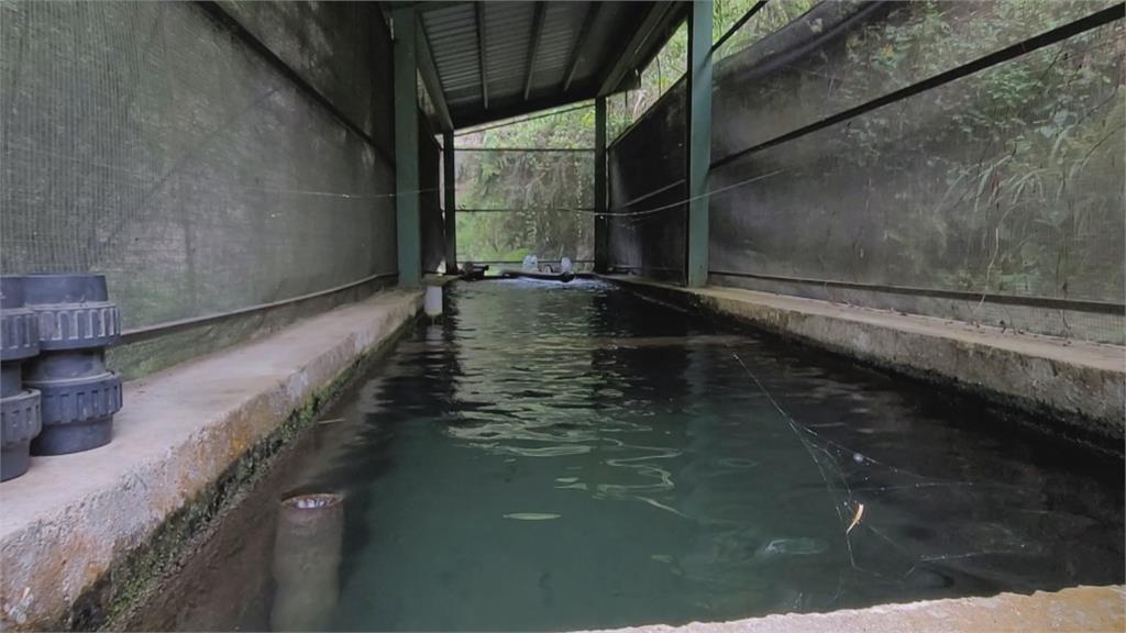 泰安溫泉仰賴山泉水 共同取水管4管線枯竭