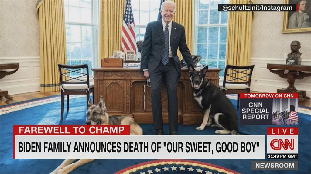 入住白宮五個月!拜登13歲愛犬「冠軍」過世 蜜雪兒推文致意