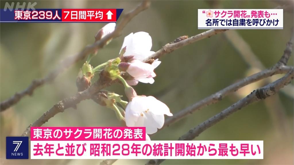 東京櫻花開了! 日氣象廳:比往年早12天