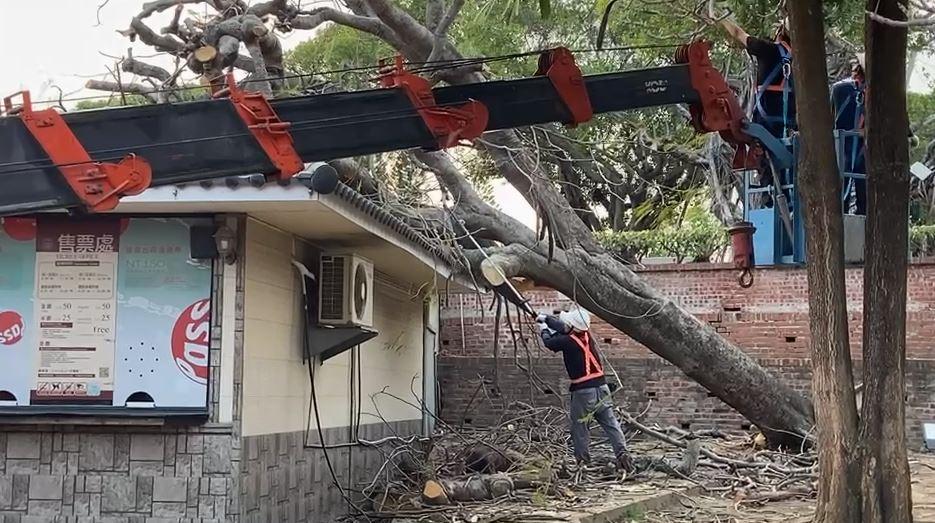 快新聞/6公尺鳳凰木突倒塌 安平古堡售票亭屋頂破大洞
