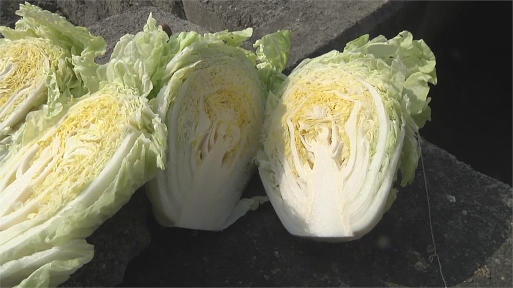 量多價跌! 小白菜1顆10元 茼蒿跌價75%