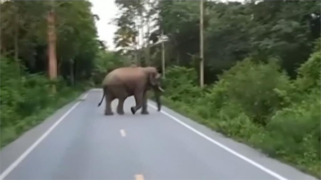 「哈囉,有食物嗎?」 泰國大象破牆民宅廚房搜刮