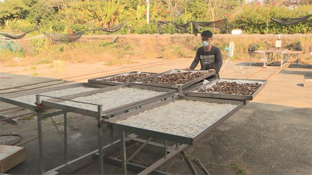 日曬香菇遭一頁式廣告盯上冒用名號販賣中國劣質菇