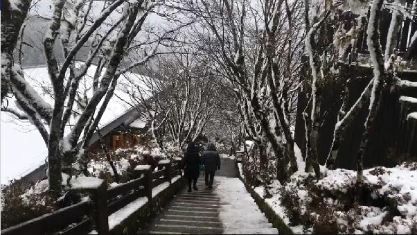 快新聞/寒流今襲台!太平山可望再降雪 入園車龍排約1公里