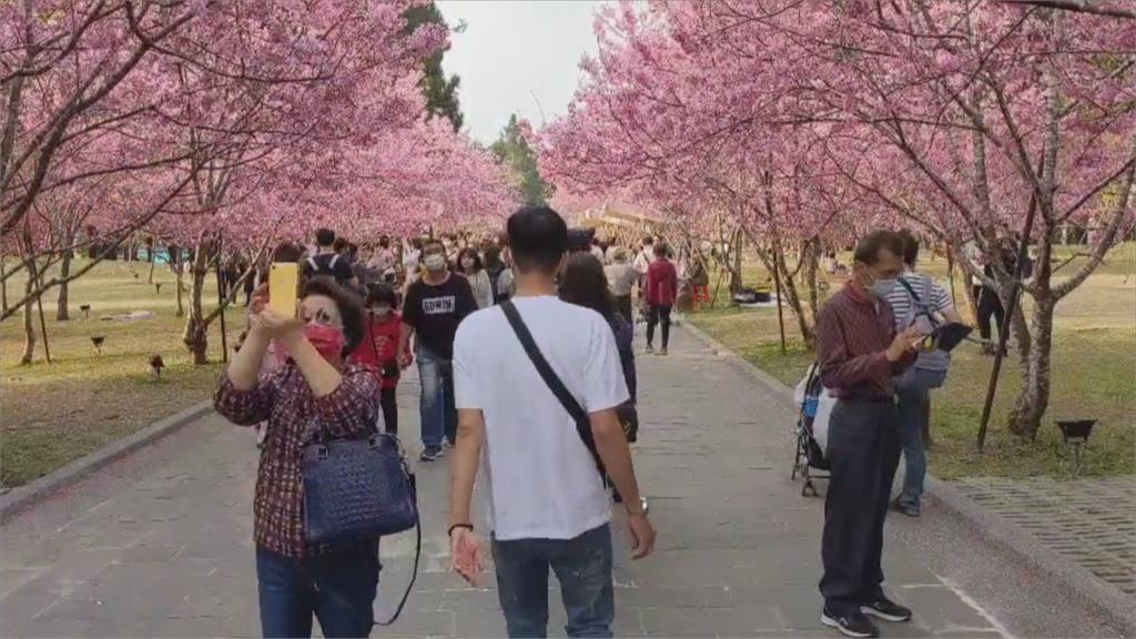1.5萬賞櫻人潮擠爆遊樂園 業者暫停遊客入場