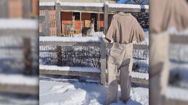 冰天雪地大玩創意 美「急凍長褲」上演動物園歷險記