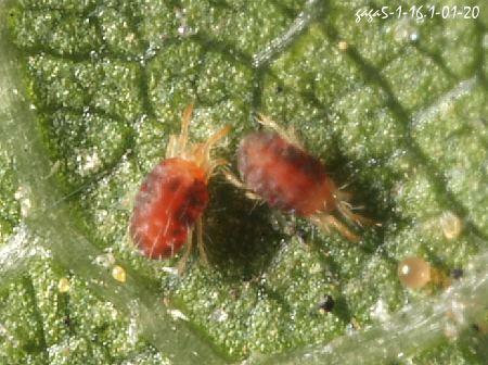 觀葉植物出現不明蟲蟲?盤點10種常見蟲害與驅蟲方法
