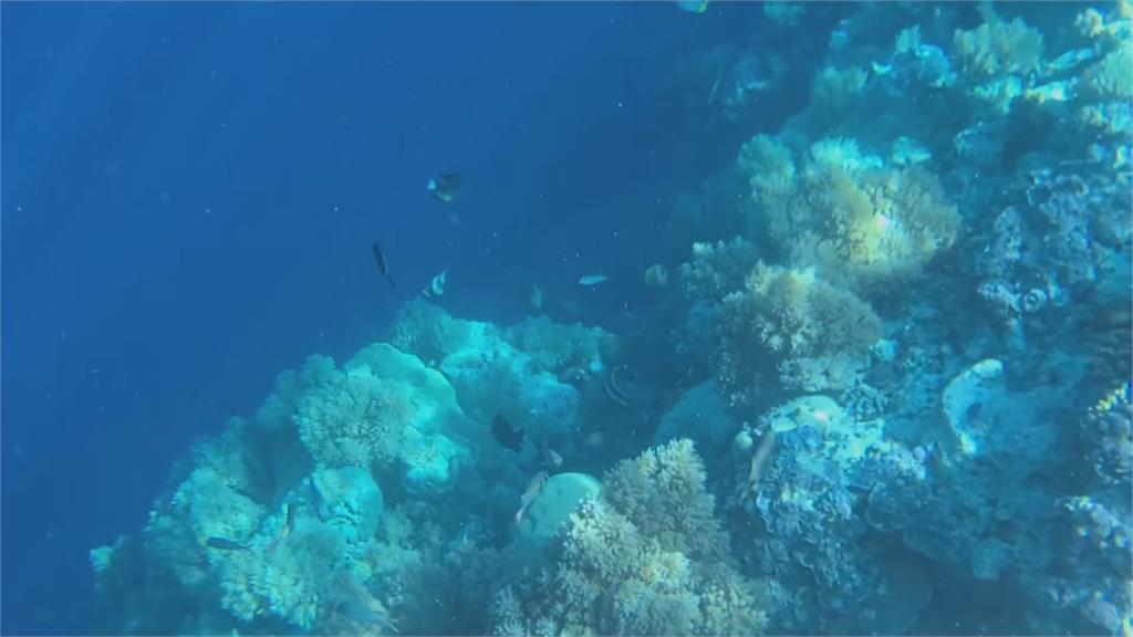 帛琉首發團直擊! 浮潛聖地對台旅客重啟