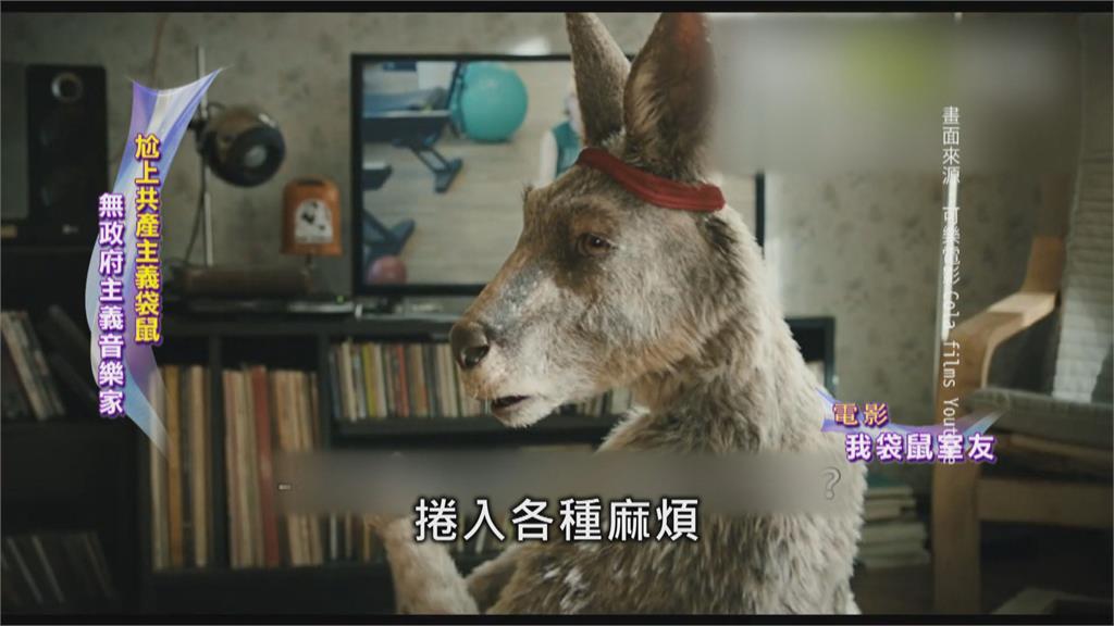 毒舌袋鼠vs.潦倒音樂家  「我的袋鼠室友」笑料百出