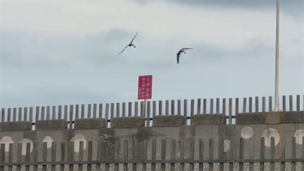 鸚鵡盤旋低飛  他們嚇到了! 飼主:鸚鵡想降落 不是要搶手機