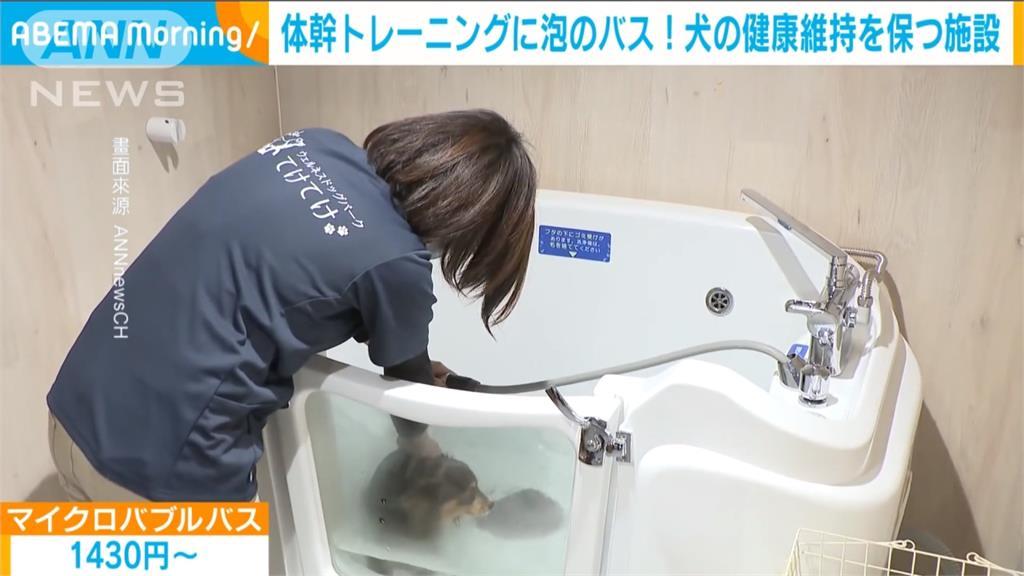毛小孩長照服務夯!日本業者推寵物居家照護搶商機