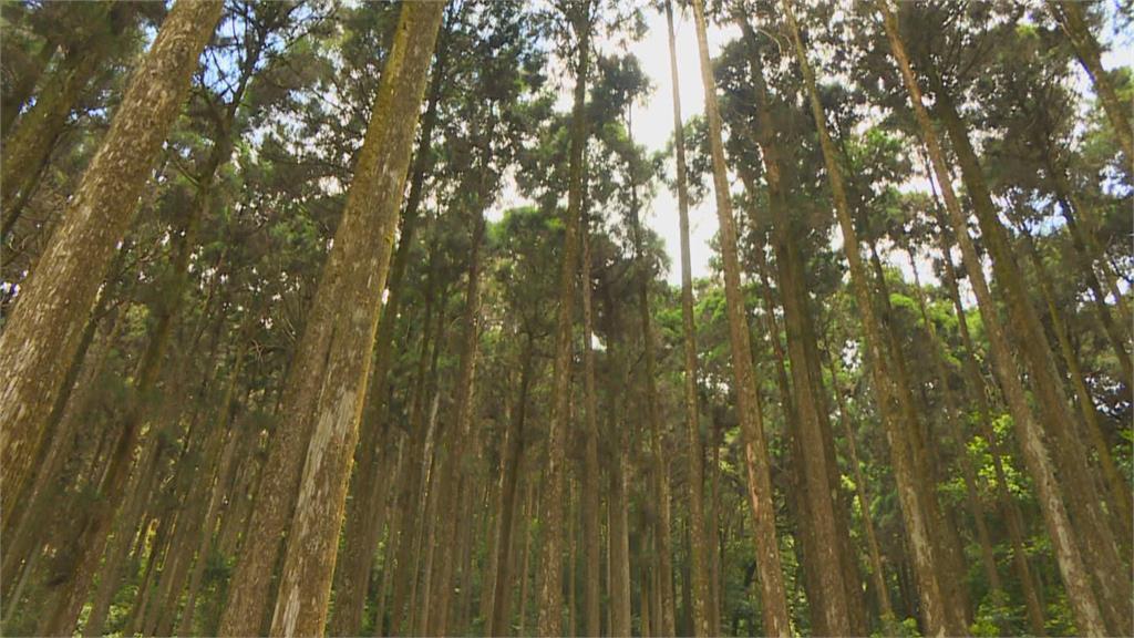暌違12年重新開放! 「藤枝森林遊樂區」預約天天秒殺