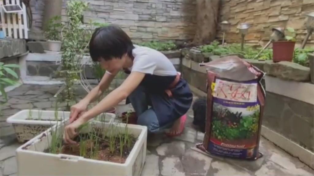 超療癒!蔡健雅宅在家迷上「以菜種菜」