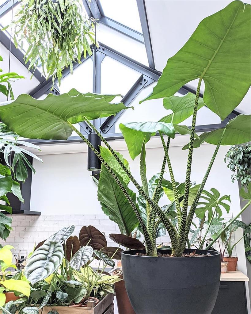 吃土也要買!16棵觀葉植物夢幻逸品