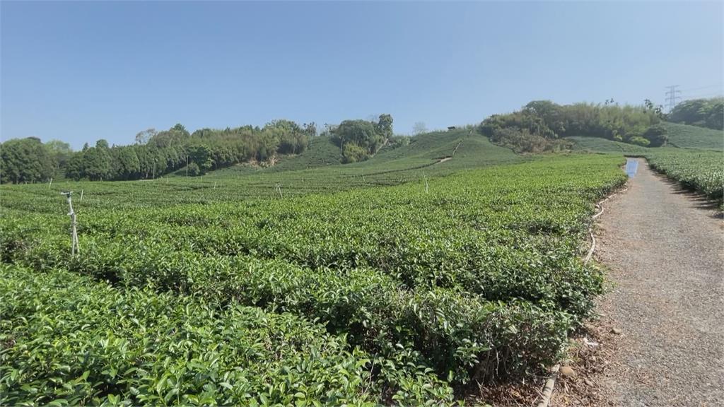 雨水不來農民好苦! 潭子綠竹筍渴到減產視察乾旱損傷茶產業 陳吉仲將提現金救助