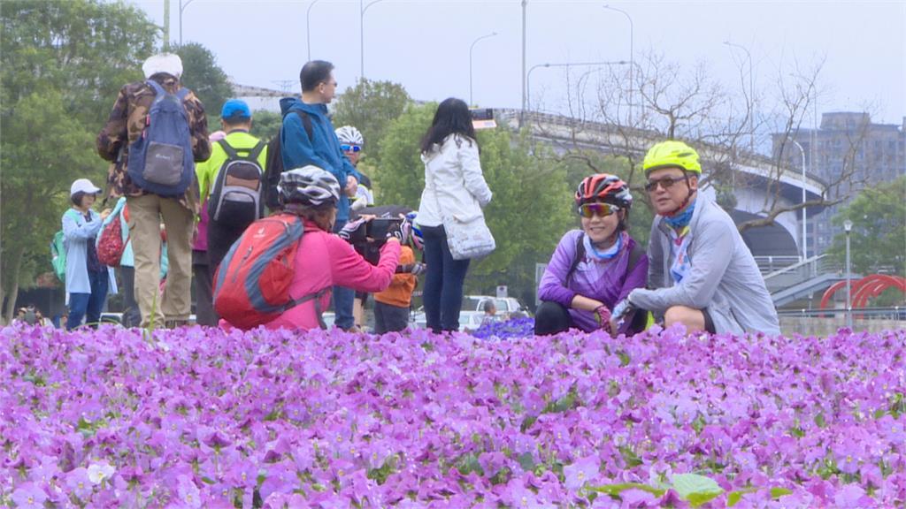 紫色漸層花毯在台北古亭! 占地8.7座籃球場花海 讓人一秒飛出國