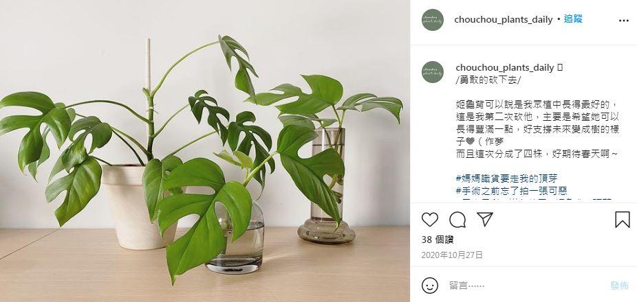 「砍頭」反而長更多?觀葉植物繁殖的7種方式