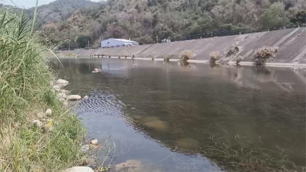 「魚虎」攻陷鯉魚潭水庫!「比牠小全吃」毀滅生態