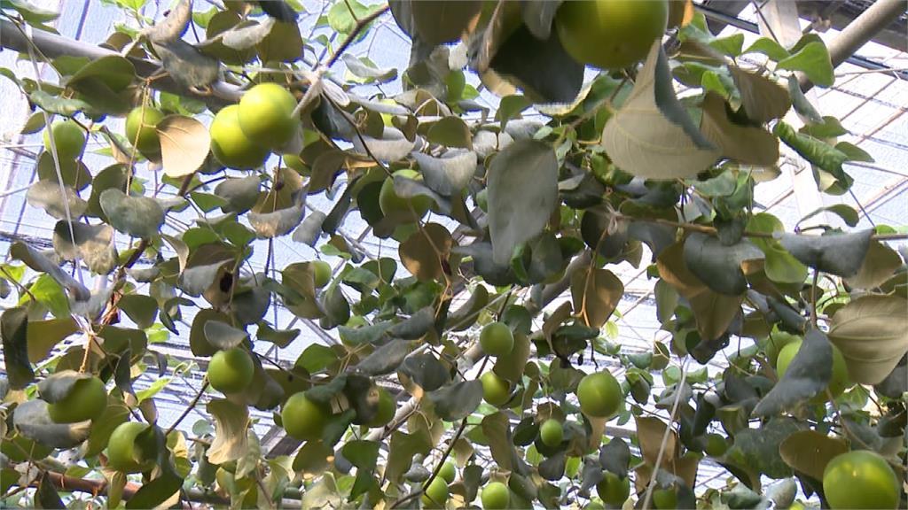 高市推廣智慧農業 申請設備最高半價補助