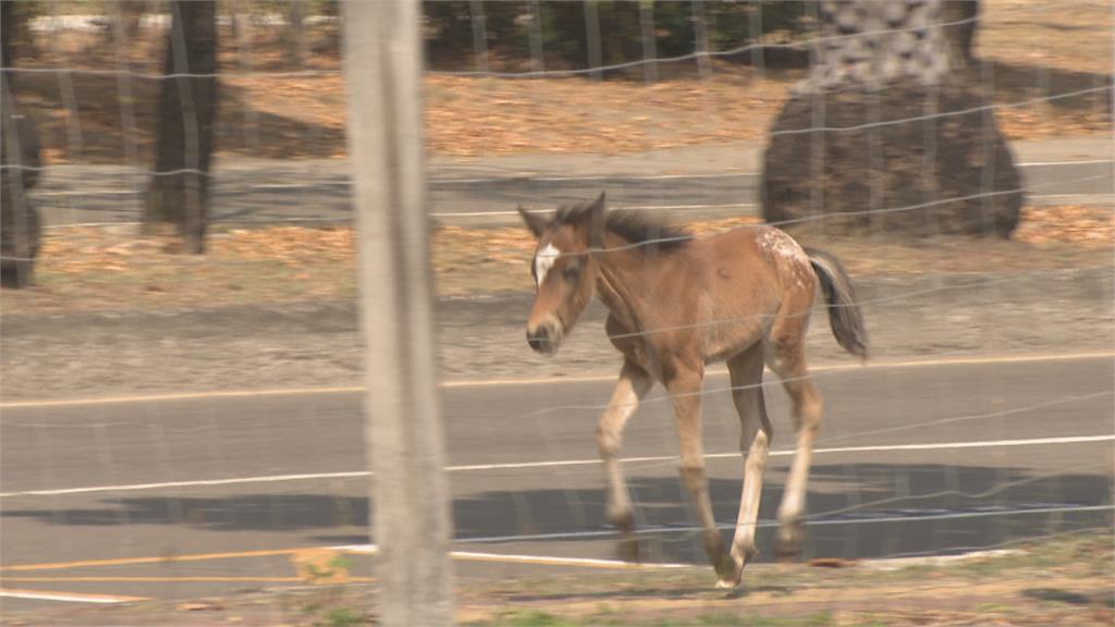 高雄市區驚見「騎車遛馬」 飼主未牽繫繩挨罰