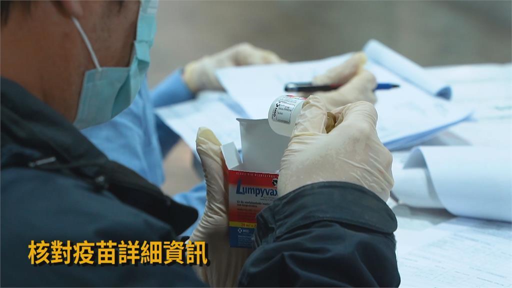 牛結節疹疫苗抵台 4月28日前全國牛隻完成接種!
