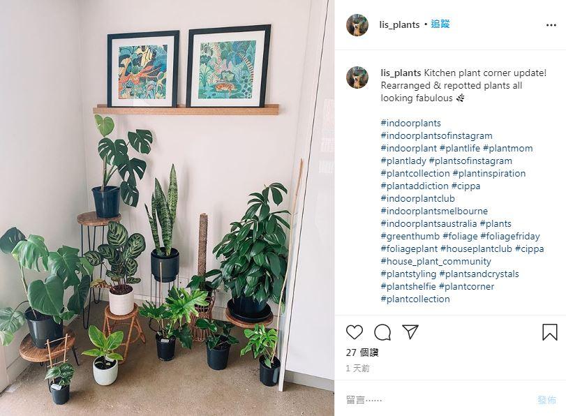 張景嵐也為它著迷!超夯室內植物你種了沒?